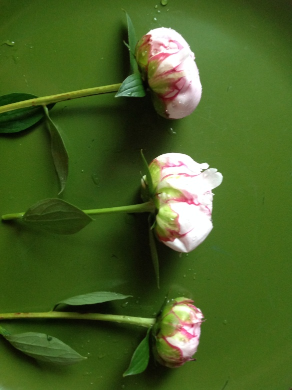 Cut peonies before foliage removal
