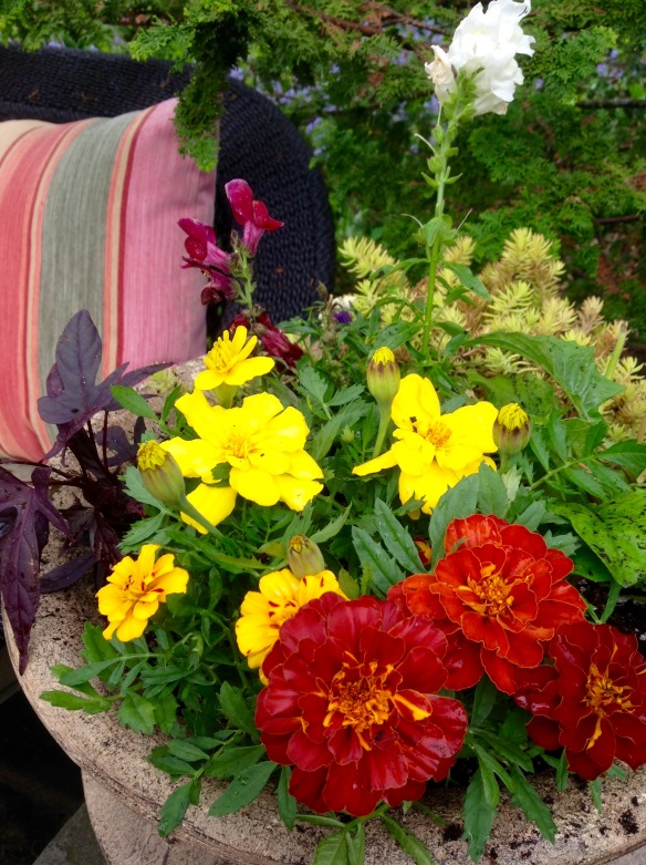 Although not a favorite, marigolds are an easy mosquito deterrent to plant as I did here in an outdoor seating area.