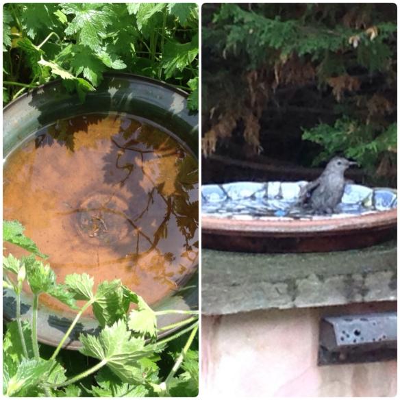 Empty birdbaths 1-2X weekly. Instructions on making a mosaic birdbath here.