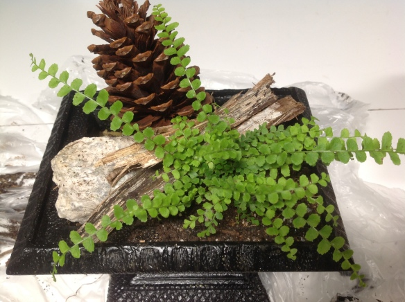 A small fern is planted into the soil and natural accessories are introduced: a pinecone, a rock, some bark.