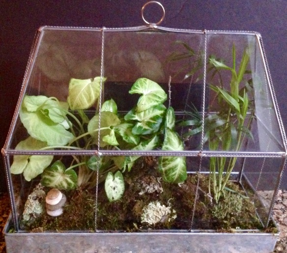 This classic terrarium was scored at a thrift shop. Missy says keep an eye for potential terrariums at tag sales and at thrift shops on your travels. You would be surprised what you can find!