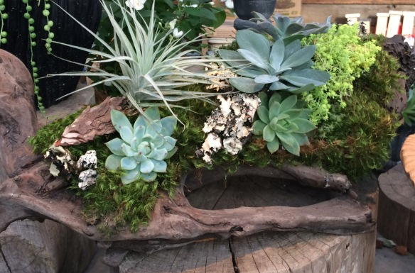 Not all terrariums are in glass: this beauty from Terrain is in a hollowed log.
